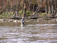 Fly Fishing on the Cumberland River
